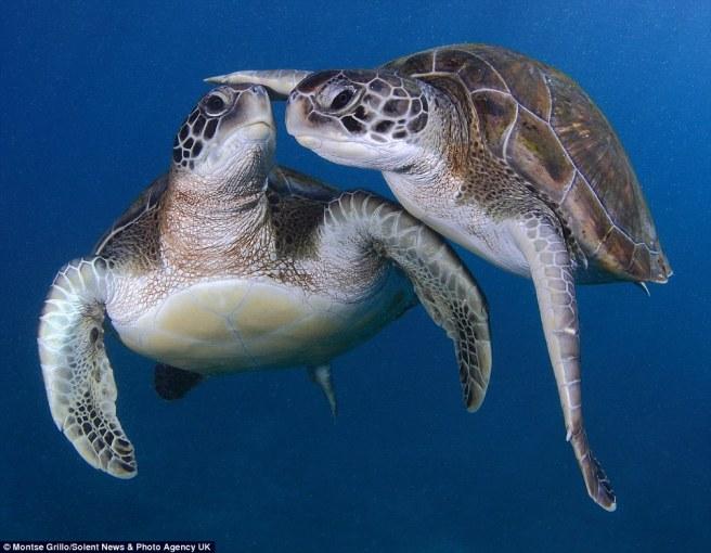 1410603938440_wps_41_These_turtles_were_so_fri.jpg
